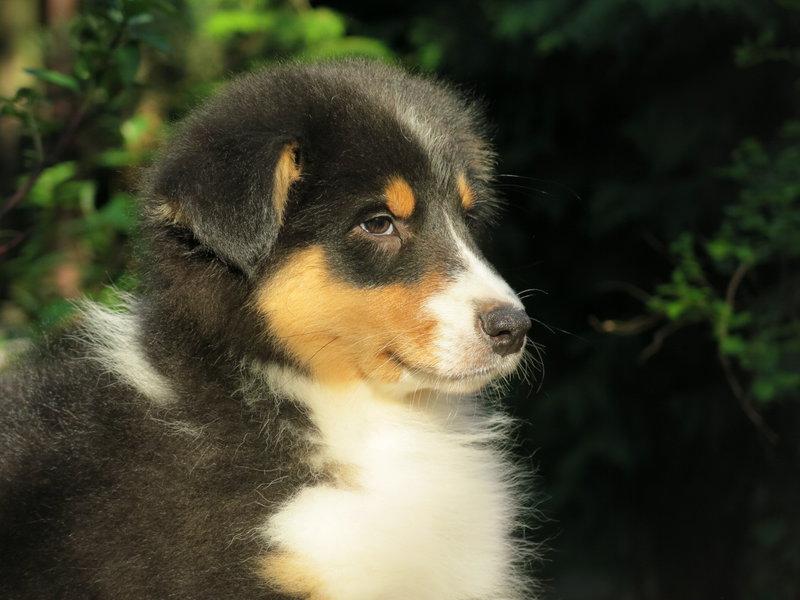 Собаки питомника скотчвуд - Страница 16 146401903480196251