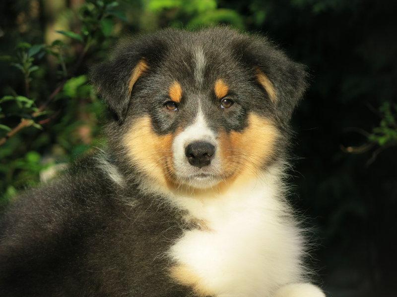 Собаки питомника скотчвуд - Страница 16 146401906649039532