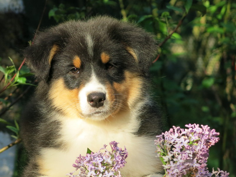 Собаки питомника скотчвуд - Страница 16 146401981277028966