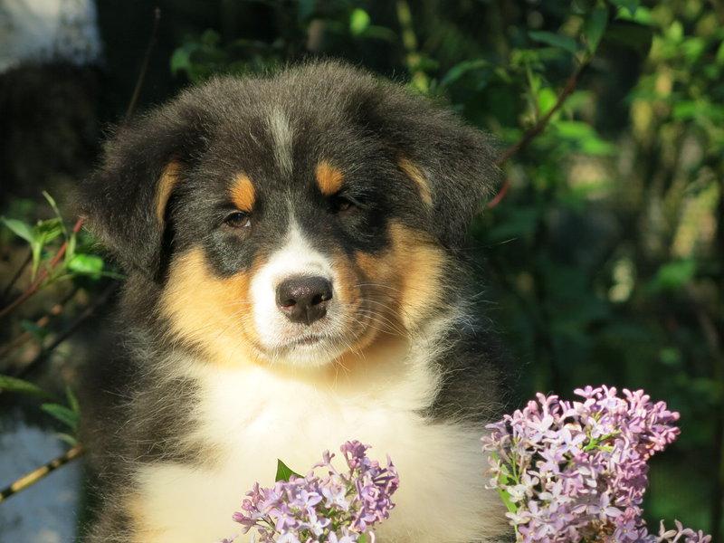 Собаки питомника скотчвуд - Страница 16 146401984541424235