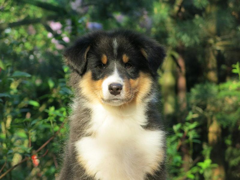 Собаки питомника скотчвуд - Страница 16 146402210559678021