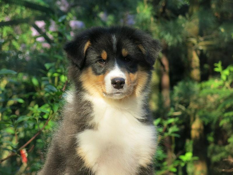 Собаки питомника скотчвуд - Страница 16 146402213446291182