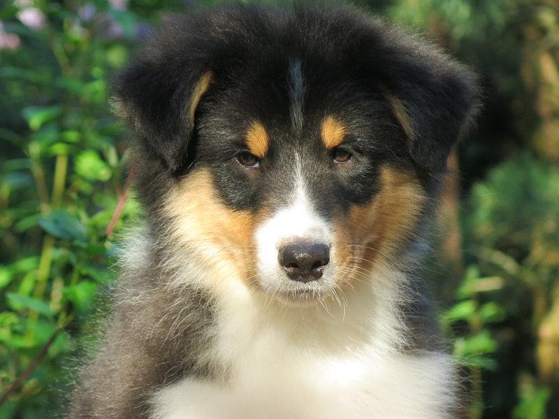 Собаки питомника скотчвуд - Страница 16 146402216857664963