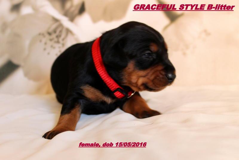 Просмотр темы - Graceful Style kennel г. Москва