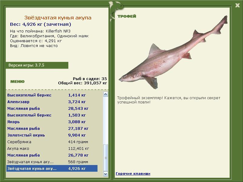 Звёздчатая кунья акула