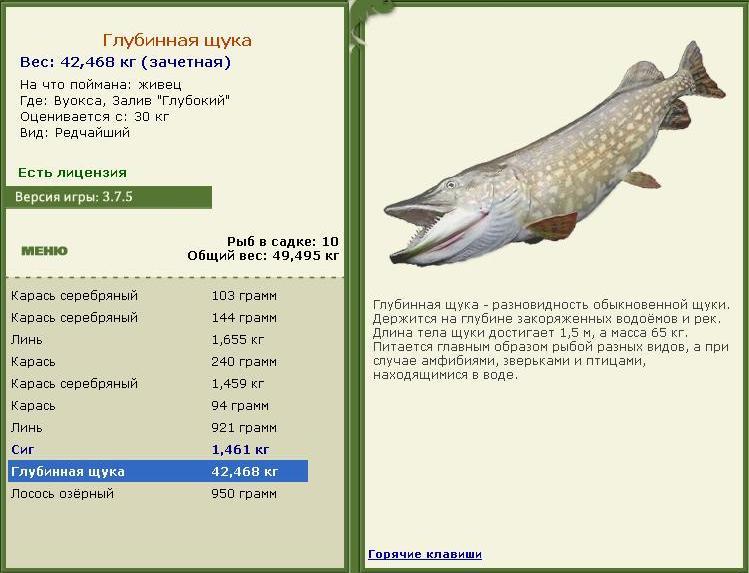 рыбалка ладога глубинная щука