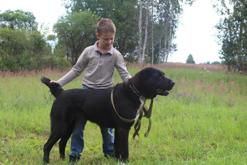 Мы и наши любимые собаки!