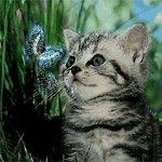 http://forumimage.ru/uploads/20160906/14731531509393479.jpg