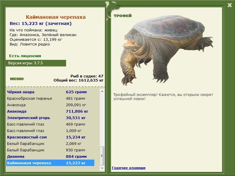 черепаха зеленая рыбалка