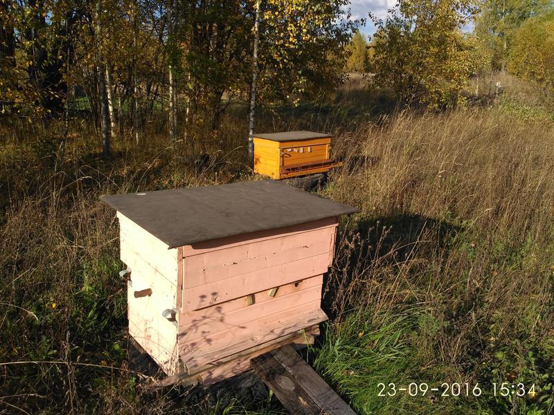 Мой пчеловодный дневник