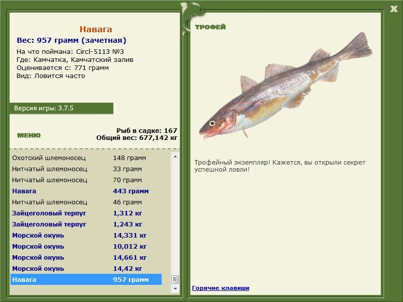 мерланг рыбалка
