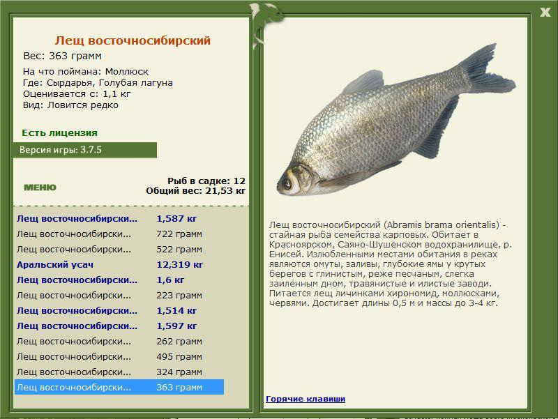 рыбалка ангара лещ восточносибирский