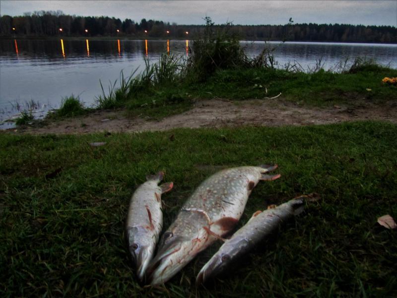 платная рыбалка по рязанскому шоссе