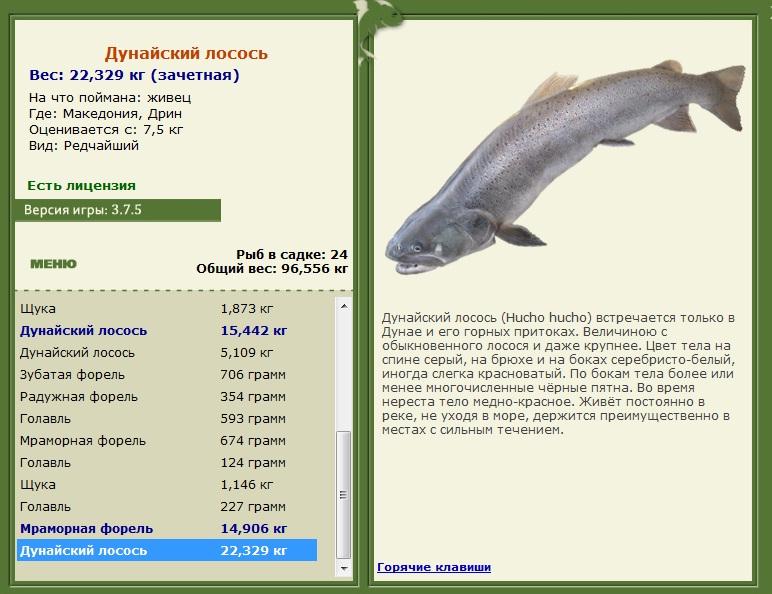 ловля дунайского лосося
