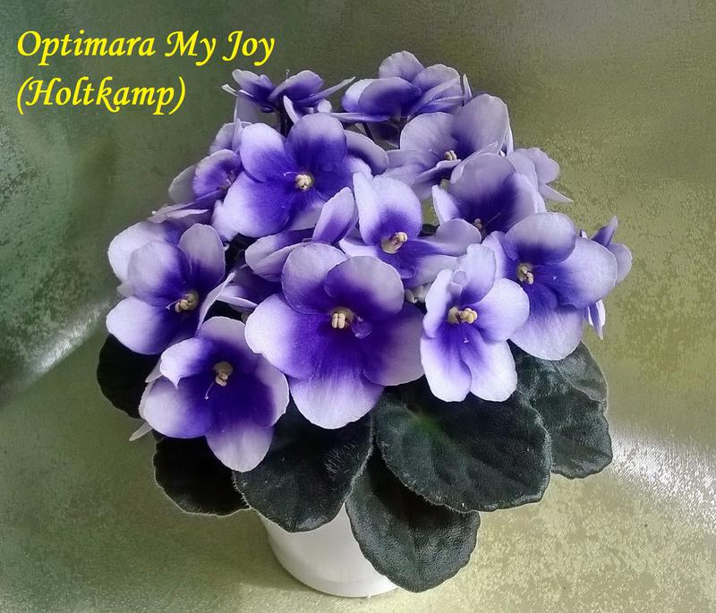 op.my joy