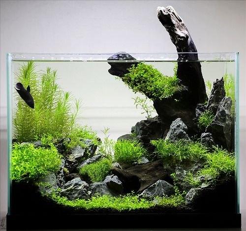 Внутренний дизайн аквариума в