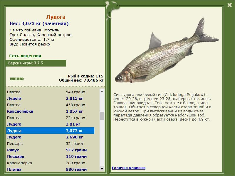 сырдарья базы рыбалка