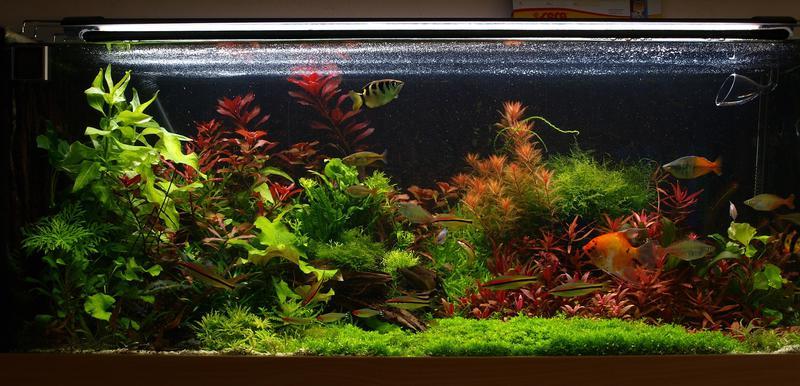 Как оформить аквариум на 300 литров