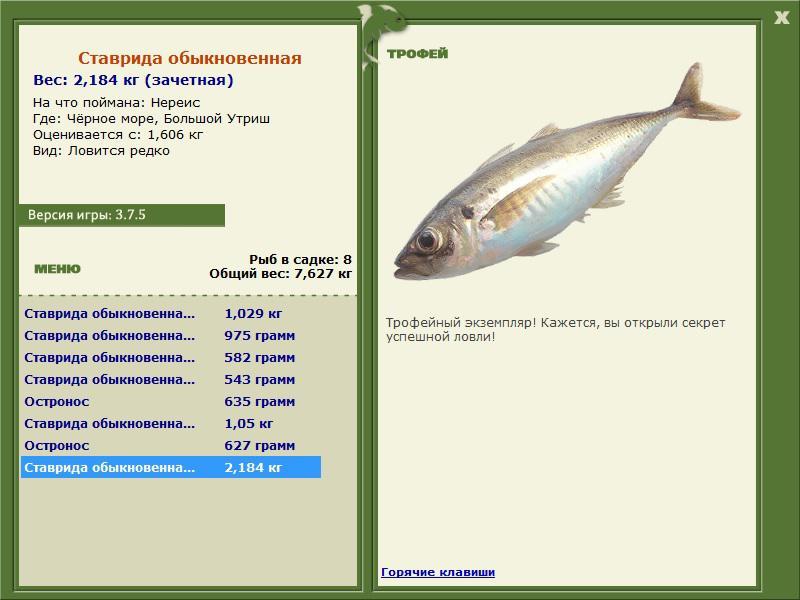 рыбалка черное море ставрида обыкновенная
