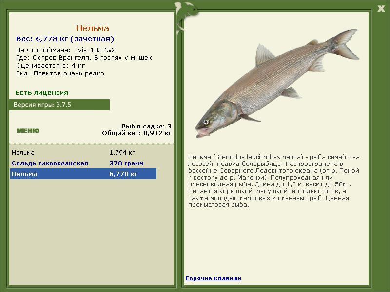 паша на что ловить рыбалка 3