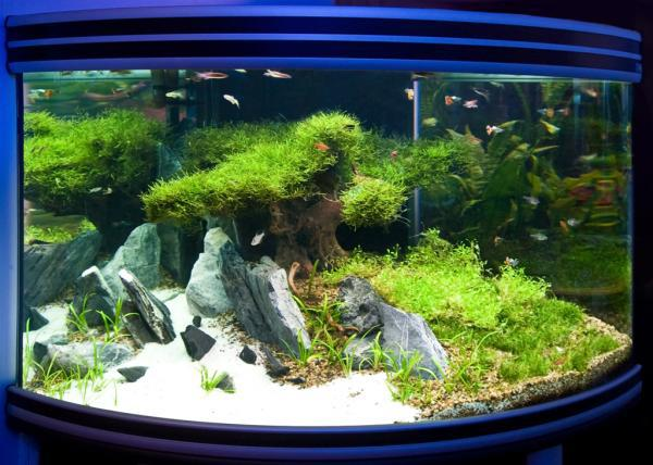 Речной аквариум