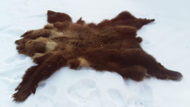 Сборник как засолить шкуру медведя в условиях тундры Считаешь