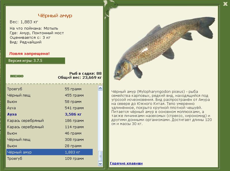 как ловить рыбу на моллюск