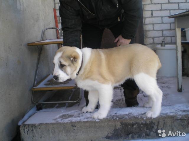 http://forumimage.ru/uploads/20170206/1486394379365210027.jpg