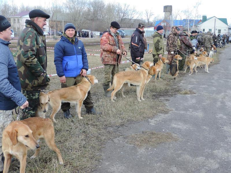 Приглашаем на XII Межрайонную выставку охотничьих собак
