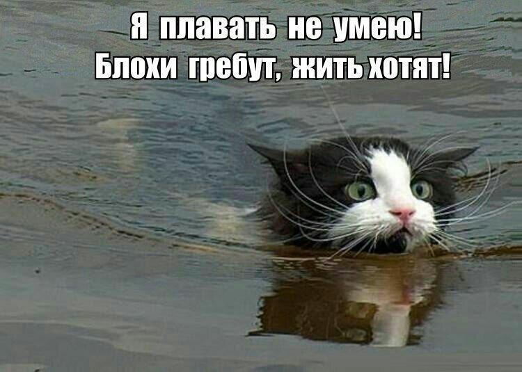 http://forumimage.ru/uploads/20170410/149182370153092526.jpg