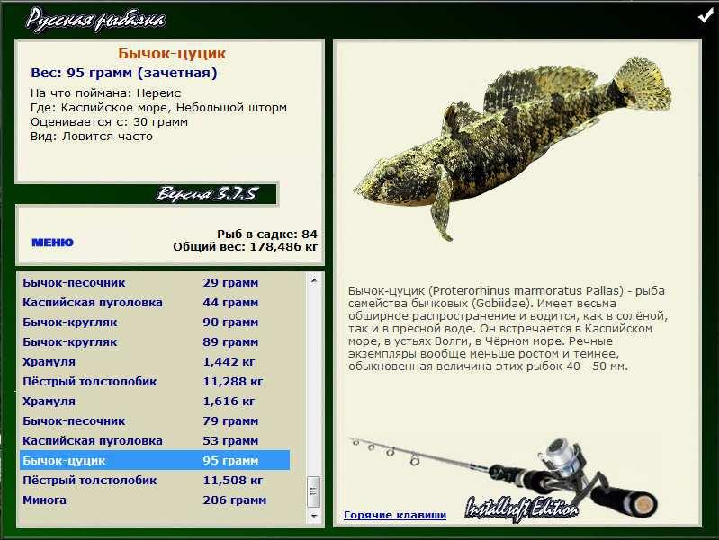 цуцик • Рыбы • РУССКАЯ РЫБАЛКА