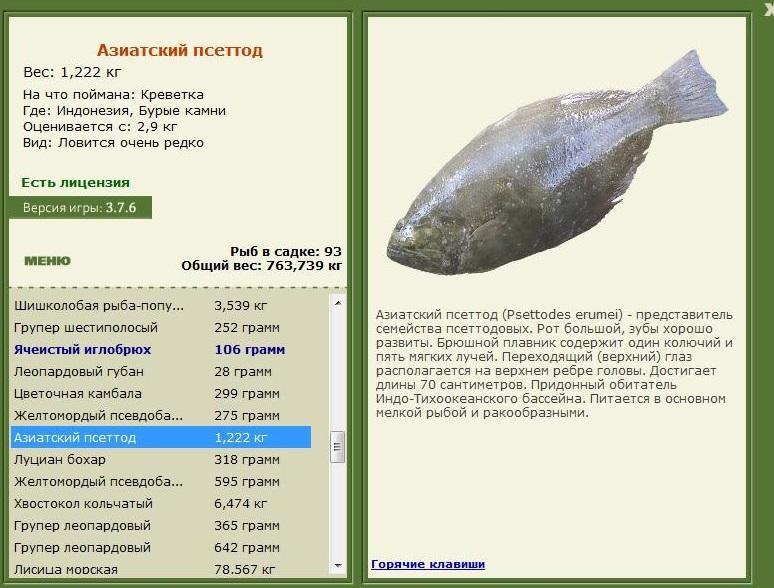 Азиатский псеттод