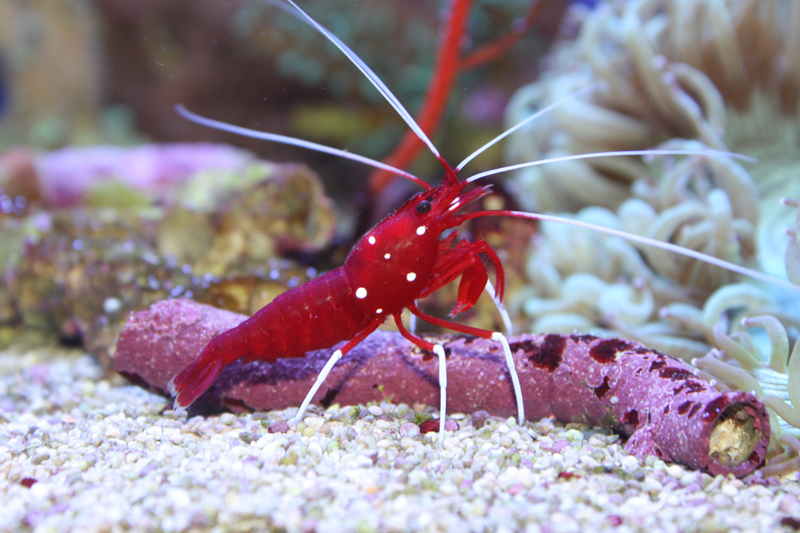 фото морские ракообразные
