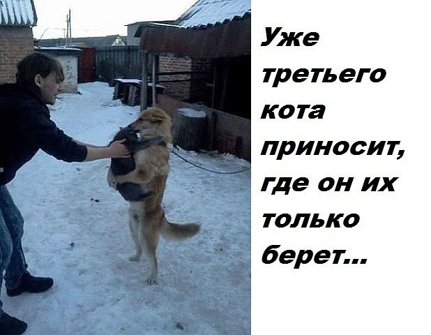 http://forumimage.ru/uploads/20170424/149302514822215174.jpg