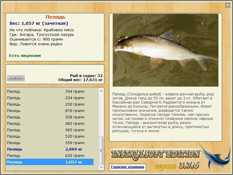 рыба пелядь поведение на что ловить