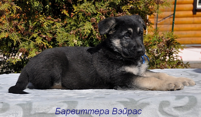 http://forumimage.ru/uploads/20170504/14938596751179371.jpg