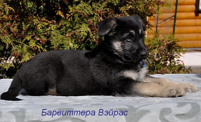 http://forumimage.ru/uploads/20170504/149385984243029955.jpg