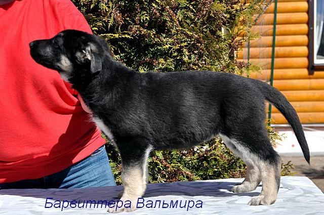 http://forumimage.ru/uploads/20170504/149386033478364847.jpg