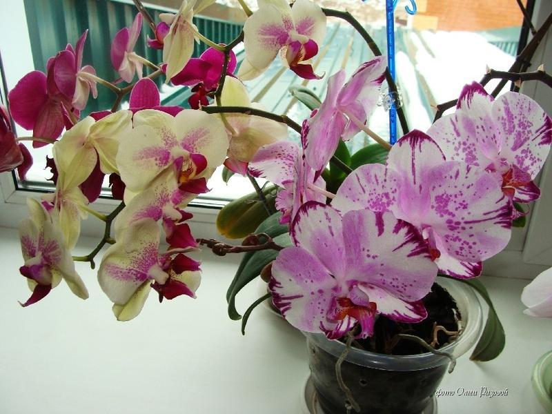 Форум комнатные цветы хвастаемся