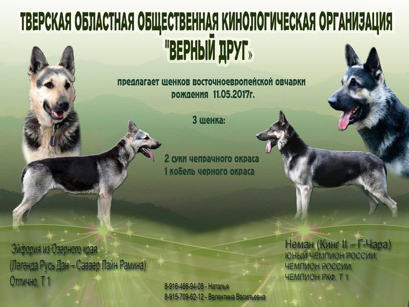 http://forumimage.ru/uploads/20170523/149554240054471541.jpg