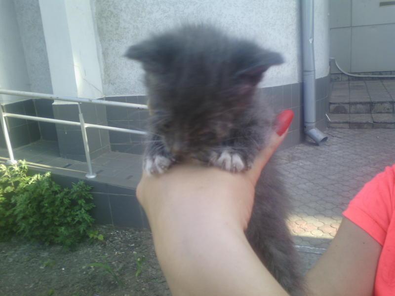 Помогите котятам з больными глазками