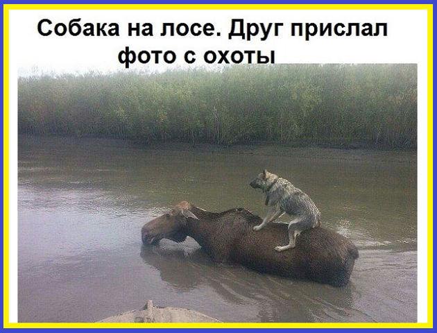 http://forumimage.ru/uploads/20170626/149843553999631155.jpg