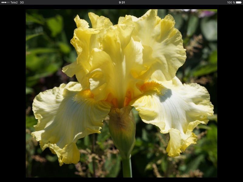 Излишки растений продам