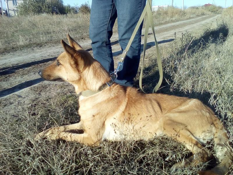истощенная собака с трассы • Темы животных ВОЛОНТЕРОВ