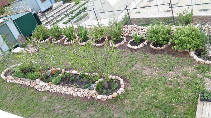 Клубника, смородина, крыжовник, малина, ежевика...цветы