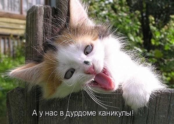 http://forumimage.ru/uploads/20170719/150044959670007050.jpg