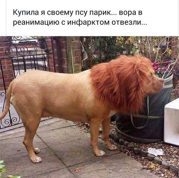 http://forumimage.ru/uploads/20170719/150044960038813379.jpg