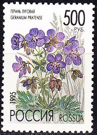 Дикорастущие цветы - полевые, луговые, степные...