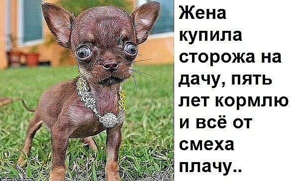 http://forumimage.ru/uploads/20170813/150265073728388752.jpg