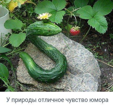 http://forumimage.ru/uploads/20170825/150365547994874442.jpg